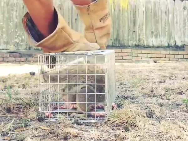 animal trap ground squirrel home