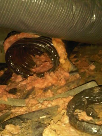 skunk insulation