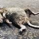 dead animal removal