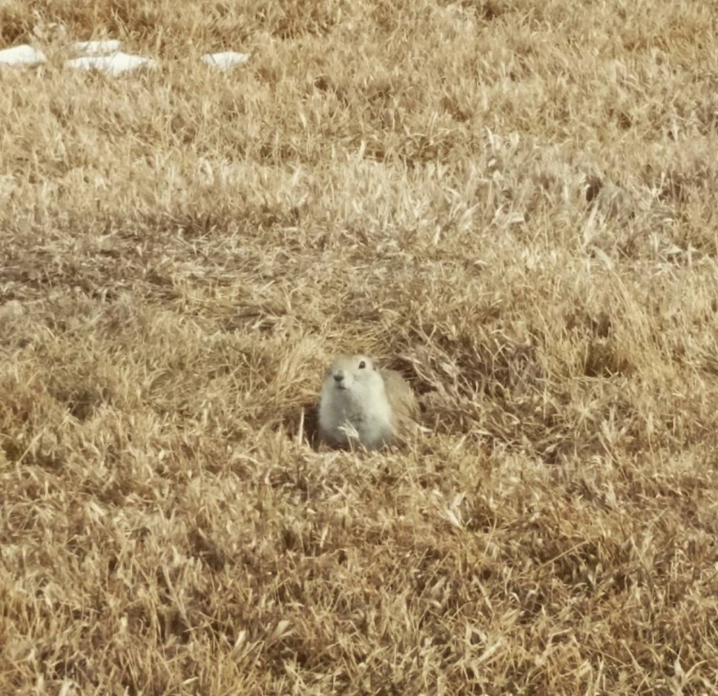 gopher control and gopher removal service