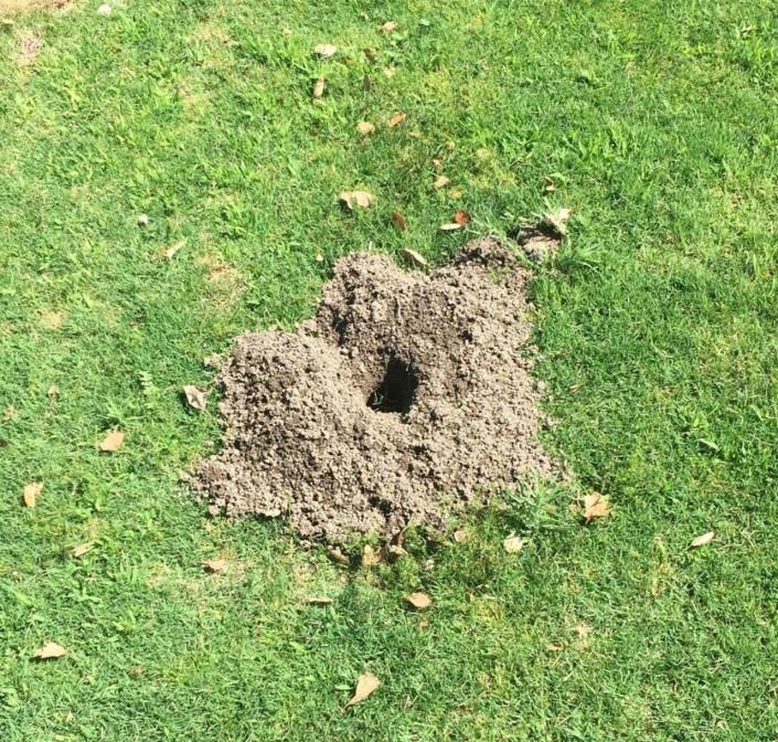 gopher mound damage dirt
