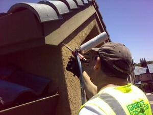 bat removal control prevention
