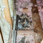 raccoon feces attic cleanup decontamination