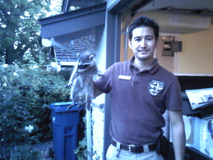 raccoon control wildlife garage