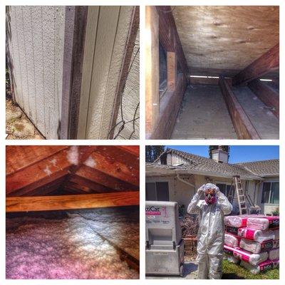 house damage  by raccoon