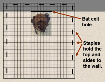 Bat Exclusion Cone Door