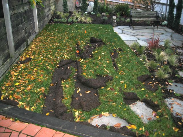 Prevent Raccoon Digging Up Lawn Or Yard