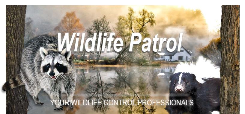 wildlife patrol Header